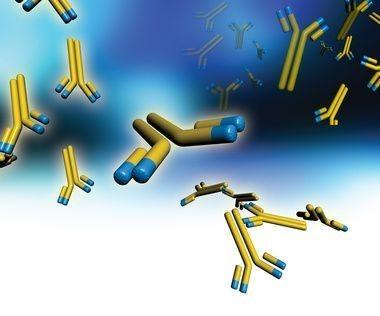 zvětšené monoklonální protilátky