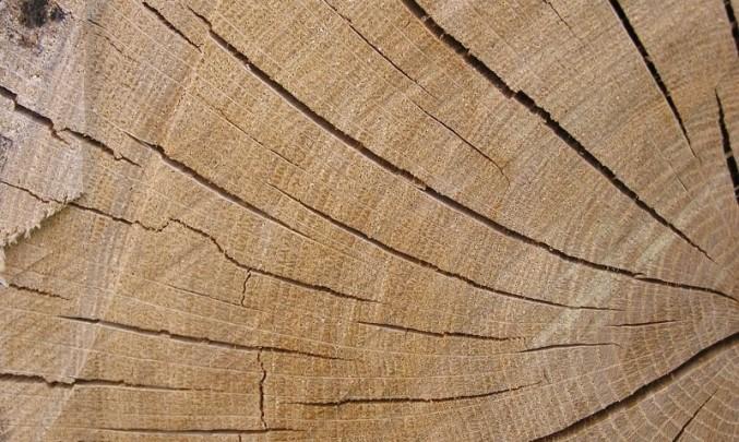 dřevo, strom,poleno, letokruhy
