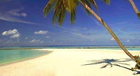 cestování, léto, dovolená, moře, pláž, koupání, písek, palma, exotika