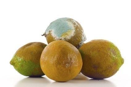 Plesnivý citrón