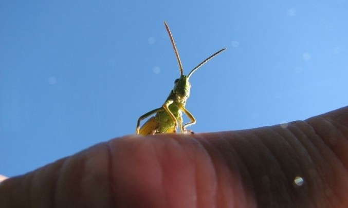 nebe, hmyz