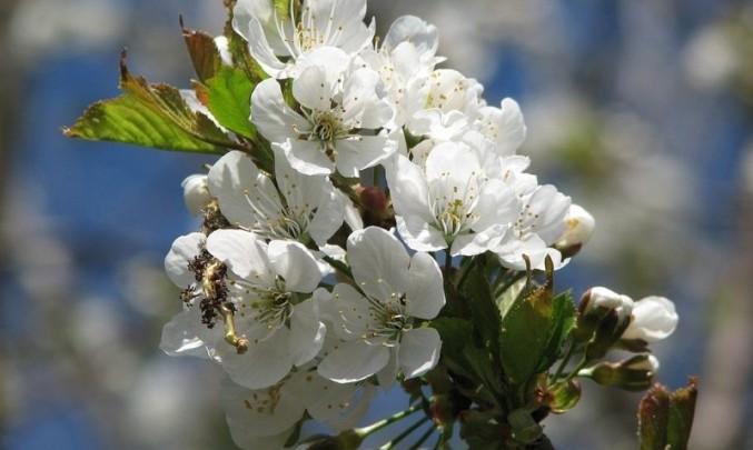 květy, strom, jaro, příroda