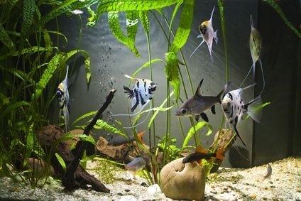 rybičky v akváriu
