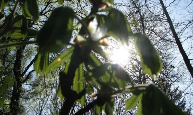 list, strom, slunce,příroda