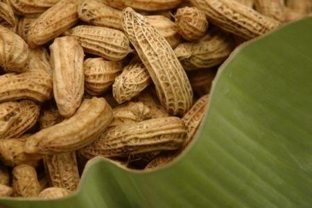 arašídy, buráky
