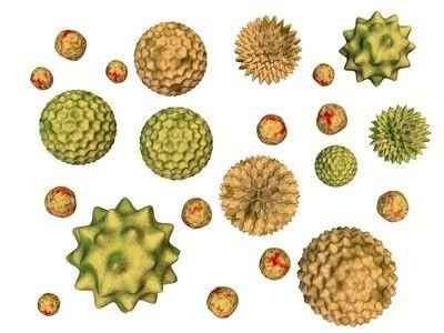 Pylová zrna