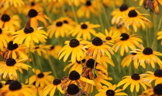 Žluté kytky