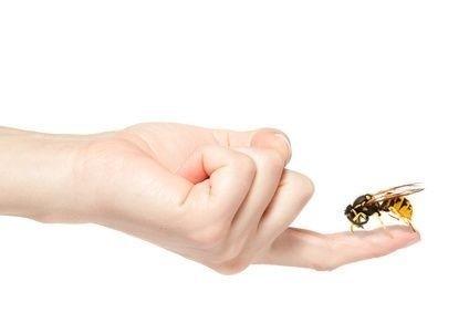 bodnutí hmyzem