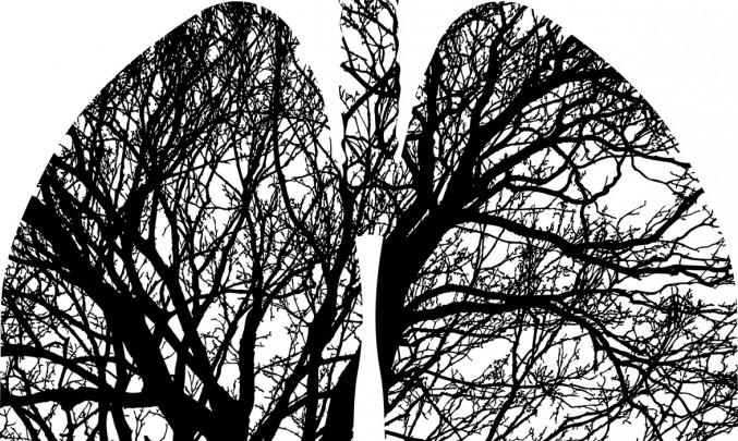 plice_strom