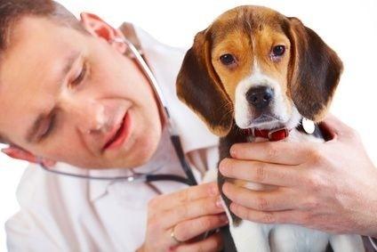 Veterinář a pes