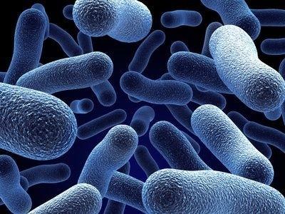 bílé krvinky, buňky