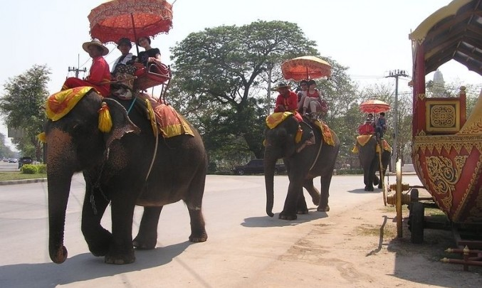 slon, exotika