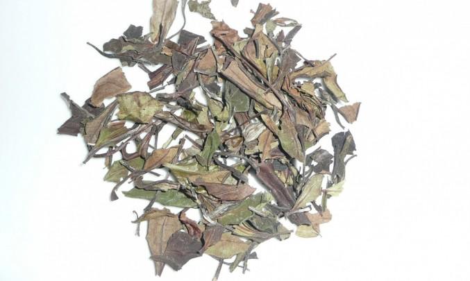 Lístky zeleného čaje