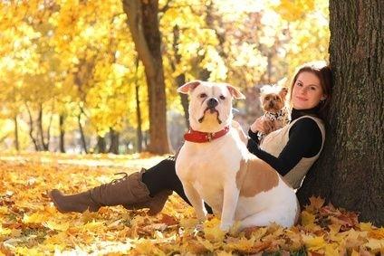 pes_podzim