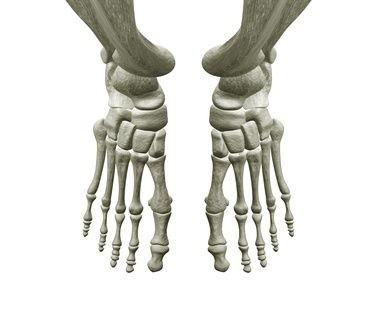 Kost,kostra,kostlivec,noha,
