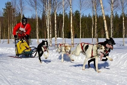 Pes,zima,mushing,sáně,zážitek,dovolená,lyže