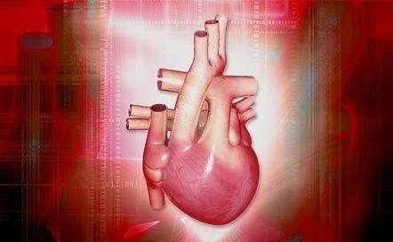 srdce_cevy