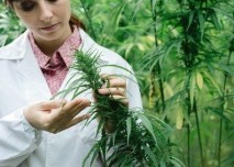 marihuana_lekar