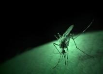 hmyzí kousnutí