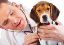 Veterinář,pes,zvěrolékař,zvíře
