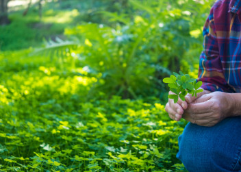 ruce_čtyřlístek_příroda_žena