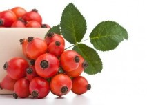 plody šípku