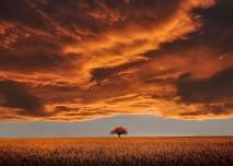 strom_nebe
