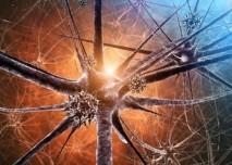 neurony_3