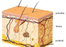 Anatomie kůže