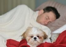 Pes, postel,spánek