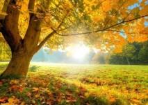 slunce,podzim