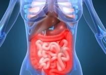 břišní a hrudní orgány, střeva, plíce, žaludek