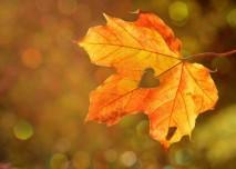 podzim_list_srdce