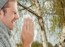 alergie na pyl břízy
