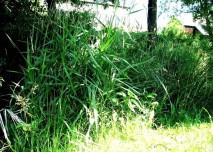 tráva