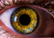 Detail lidského oka