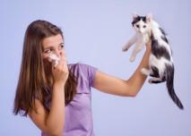 alergie na kočičí srst
