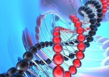 DNA,gen,dědičnost