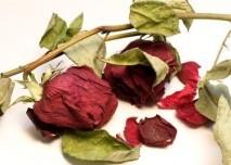 Sušené květy - růže