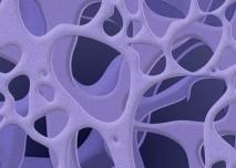 Struktura kosti