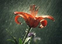 Déšť, bouřka