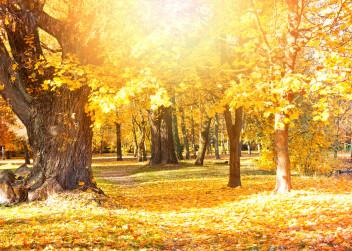 podzim_listy_pocasi_rocni_obdobi
