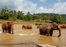sri lanka, sloni, asie