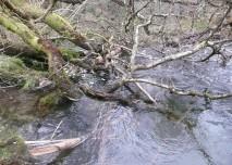 Potok a stromy