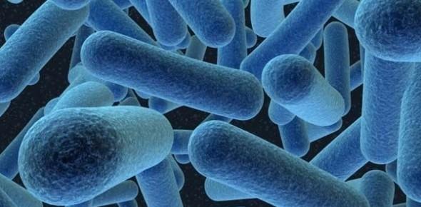 Bakterie mléčného kvašení se nacházejí hlavně v jogurtu