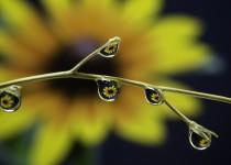S jarní očistou organismu pomůže homeopatie
