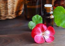 Vaše nemoc může být kratší díky extraktu z jihoafrické pelargonie